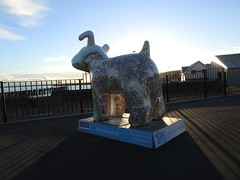 DSCN6302 (stamford0001) Tags: great north snow dogs shields fish quay snowdogs st oswalds hospice