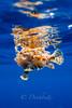 IMG_9712 (nealmoc) Tags: bigisland hawaii kona underwater pelagic whoa dorkbutts canon wideangle tokina nauticam