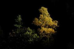 Sobrarbe en otoo. Luz en el Congosto de las Devotas (carnuzo) Tags: leica m9 aposummicron 75mm