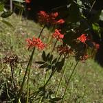 Blossoming thumbnail
