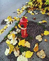 Yellow Safety High Angle View Outdoors Flower No People Leaf Day Close-up Fragility Fire Hydrant Nature (perriscope) Tags: yellow safety highangleview outdoors flower nopeople leaf day closeup fragility firehydrant nature