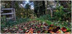 Autumn. (vegetus aer) Tags: none woodwaltonfen greatfen greatfenproject wildlifetrust bcnwildlifetrust nnr cambridgeshire wildlife autumn