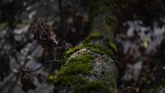 Forest and dosh (Belua Technicus) Tags: moos dosh wald baumstamm ast blatt herbst forest wood nice blätter