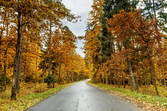 Trees near the road (Geraldas) Tags: autumn colorful coniferous foliage forest grass green growth landscape leaf leaves morning nature park pine plant shrubbery spruce summer sunny trees trunk wood yellow