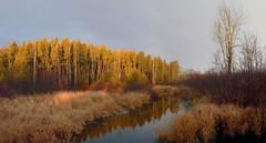 Dawn at Lutteral Creek (virgil martin) Tags: sunrise landscape creek wellingtoncounty ontario canada panasoniclumixg85 microsoftice gimp