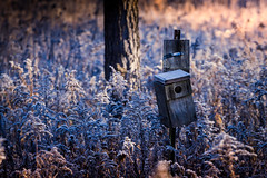 vacancy (Christian Collins) Tags: birdhouse bird house vacancy frost weeds grass tree woods forest bosque amanecer sunrise cold frozen battered canon t2i ef70200mmf4lusm