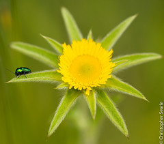 At Chastolas 5 (Jeaunse23) Tags: france macro ardeche chastolas