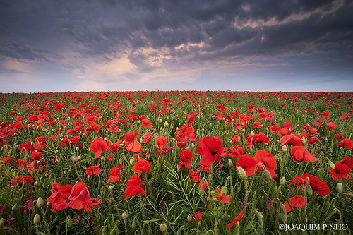 Poppy World