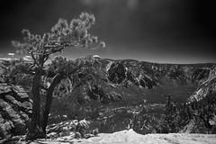 Invoking My Inner Ansel Adams (redrijn) Tags: california blackandwhite bw tree digital canon nationalpark nps yosemite 5d dslr polarizer anseladams ef1740mmf4lusm upperyosemitefallstrail
