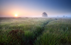 path through grass in misty sunrise (Olha Rohulya) Tags: road trip morning travel blue sunset wild summer sky orange sun sunlight abstract tree green netherlands dutch grass sunshine silhouette yellow sunrise way season landscape outside outdoors countryside early scenery silent view path background seasonal spiderweb scenic meadow tranquility nobody nopeople calm clear direction swamp destination marsh spiritual bog plain narrow tranquil drenthe
