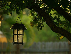 I left the light on (Shelby's Trail) Tags: fish tree glass fence bokeh stained lantern mybackyard hcs eightdaysaweek twtme clichesaturday