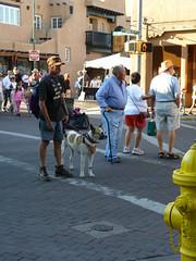 Indian Market Visitors (suenosdeuomi) Tags: dog newmexico santafe lumix servicedog indianmarket doggles panasoniclumixdmcfz35