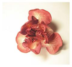 Iris (HER.Cha.) Tags: iris france flower fleur brooch silk dyeing corsage fleuriste silkflower artificielle  broochfrance