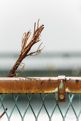 Roots (SandoCap) Tags: old urban stilllife white nature japan fence rust branch mesh object twig  fujifilm   mil    xe1     vsco   fujinonxf55200mm