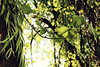Branches and twines (Arianna Fietta) Tags: sunset summer sun plant green nature leaf branches twines