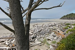 olympic peninsula - washington - 5 (hors-saison) Tags: ocean park usa west