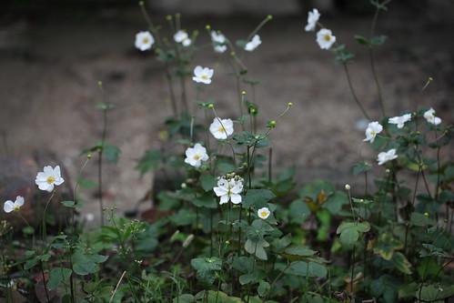 境内の小花