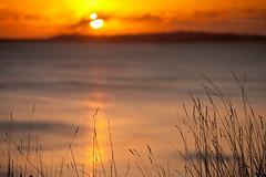 Osmington Sunset (RichardBeech) Tags: november sunset sea nature grass night landscape evening dorset weymouth osmington canon5dmarkii richardbeech