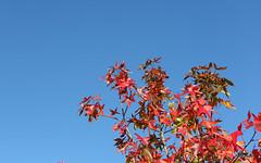 Couleurs d'automne (oncle_john) Tags: france tree fall automne canon lyon 5d arbre parc feuille mk3 ttedor mark3 5d3 onclejohn momentsdecapture