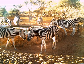 Namibia Safari - Lake Lodge 37