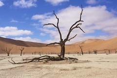 Deadvlei (piazzi1969) Tags: africa deadvlei namibia scenery tree namib afrika dune