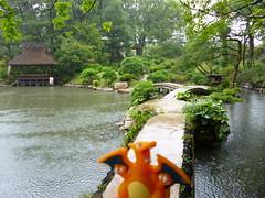 Charizard in Hiroshima, Hiroshima 13 (Shukkei-en Garden) (Kasadera) Tags: toys hiroshima figure pokemon pokmon  charizard   glurak  shukkeiengarden pokemonkids   dracaufeu