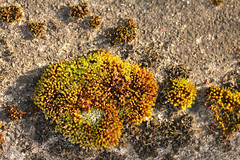 Concrete Ocean With Riffs Of Moss (gripspix) Tags: nature concrete moss natur moos beton 20131204