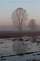 Riflesso d'autunno (andreaprinelliphoto) Tags: canon nebbia autunno pianura melegnano padana andreaprinelliphoto andreaprinelli prinelli