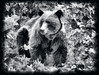 Grizz (Jeff Clow) Tags: wildlife grizzly albertacanada banffnationalpark grizzlybear ©jeffrclow jeffclowphototour banffphototour