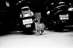 ( / LINUS) Tags: bw film cat nikon stray f80 streetcat