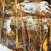 Bellaire Ohio Indian Run Falls