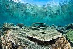 Luleo (mousstique) Tags: sun indonesia underwater diving mona colourful sulawesi halmahera unspoilt coralgarden weda luleo monadienhart wedabay