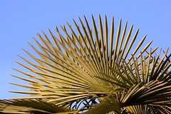 Ventaglio verde () Tags: foglie photography photo leaf foto photographer photos palm foglia fotografia palma stefano fotografo ventaglio laves trucco zush stefanotrucco