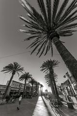 Hermosa (rowjimmy76) Tags: people bw woman sun white man black tree canon palms walking star coast pier bikes sigma socal boardwalk 5d duotone february southerncalifornia hermosabeach 2014 losangelescounty 5dm2 5dmii 1224mmf4556afiidghsm