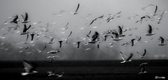 Birds (J.Valds) Tags:
