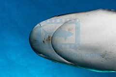 2014 03 TIGER BEACH-2250