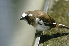 (ddsnet) Tags: bird birds zoo sony hsinchu taiwan 99  slt      sinpu hsinpu zoobird    singlelenstranslucent 99v