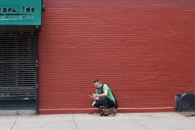 dog newyork wall manhattan smartphone leash redwall dachsund streetsofnewyork everyblock