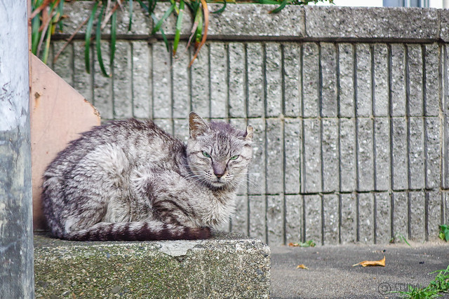 Today's Cat@2014-06-19