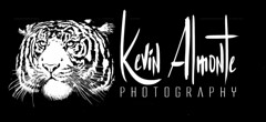 My New Logo (Kevin Almonte Photography) Tags: art logo tiger tigre dominicano quisqueyano sonya77m2 kevinalmontephotography