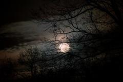 My moon shots 2 ( Explored ) (Calvin Morgan) Tags: nikond700 moon nighttimephotography trees fall nikon70300