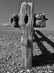 High Noon (Compactman) Tags: wood groyne wethered weatherbeaten old gnarled cross beach shore pevensey sussex panasonic lumix g7 blackandwhite bw monochrome