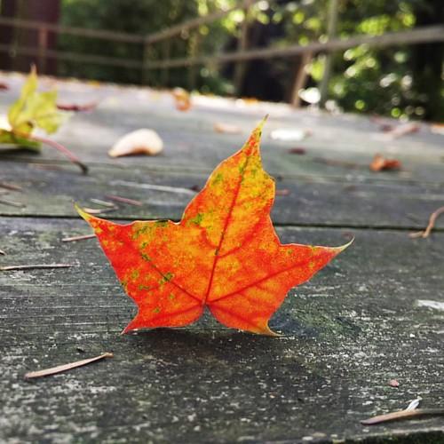 Színpadon: az ősz #nofilter