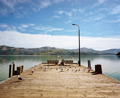 Where's Margaret? (@fotodudenz) Tags: mamiya7 film rangefinder super wide angle 43mm medium format akaroa harbour wharf christchurch canterbury new zealand 2016 kodak portra sunny seagulls fish chips teenagers
