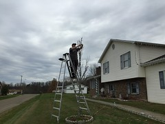 Branch Wrapping Lights (Dave Vandyne) Tags: christmas lights holiday holidays decorating decorations 2015 display setting up branch wrapping