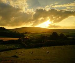 Breakthrough! (tog@goldenhour) Tags: sunset goldenhour exmoor tivington landscape sonya7r sheep somerset toggoldenhour sheepfarm exmoorfarm sheepfarmingexmoor squareformat 11 beautifullight