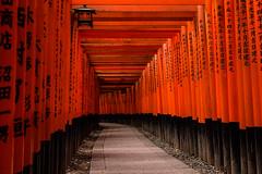(Nalea Erie) Tags:     fushimiinari kyoto red jinja canon eos kiss x5 600d