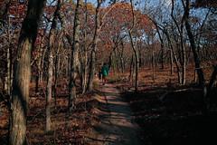 7Q7A6193 (armincreates) Tags: nature fall colors trees lake mountains hike dog puppy beauty trail panorama sunset cows farm wisconsin illinois usa walk