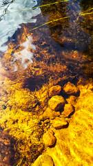 20160811_125838-1 (Andre56154) Tags: schweden sweden sverige wasser water bach flus river stream pflanze spiegelung reflection reflexion