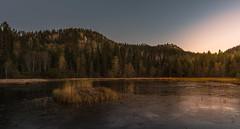 Dull morning (strupert) Tags: straw frozen frost ice lake sunrise circularpolarizer lee d810 nikon morning autumn hst trondheim trndelag jonsvannet